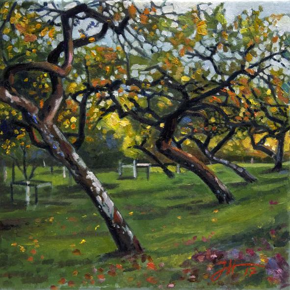Apfelbaumwiese im Abendlicht